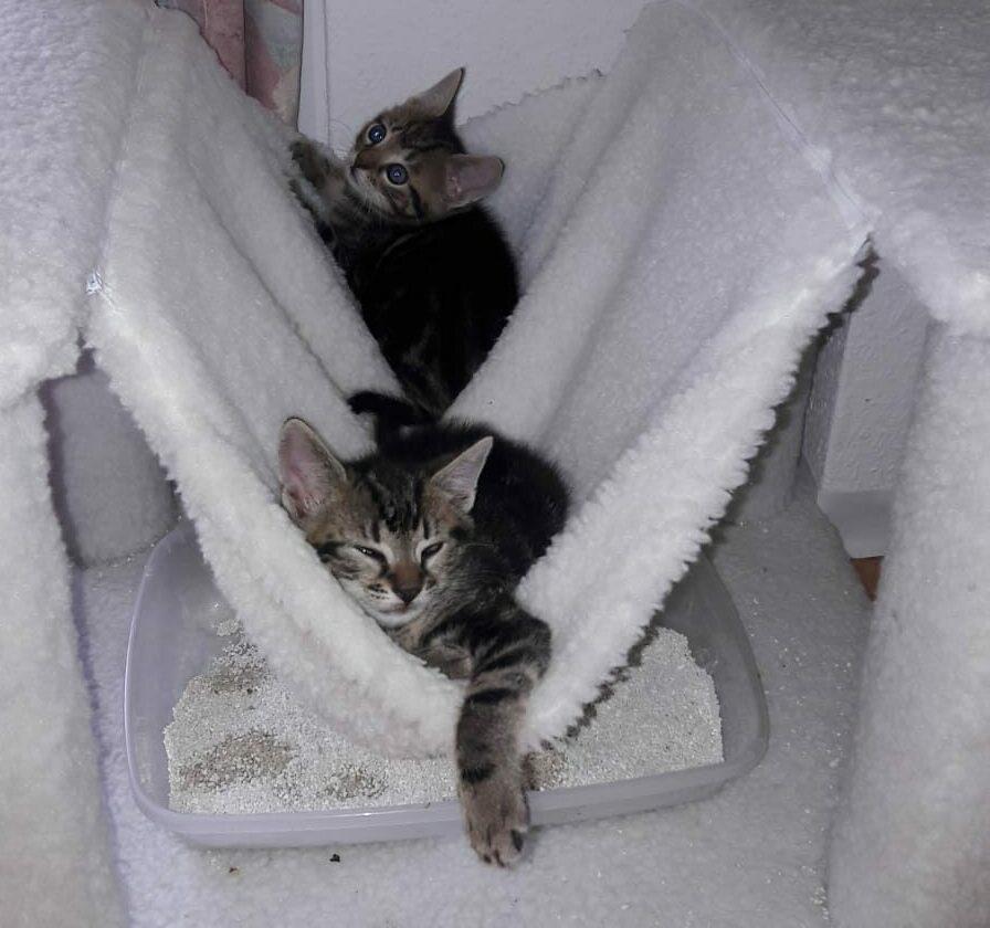Kitten Aus Dem Tierheim