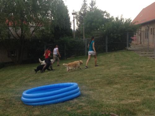 Doggi fit