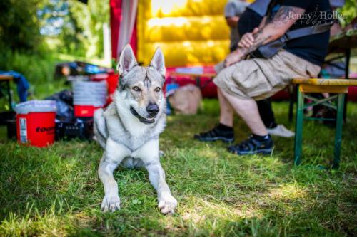 2017-08-19-Jen-Tierheimfest-44