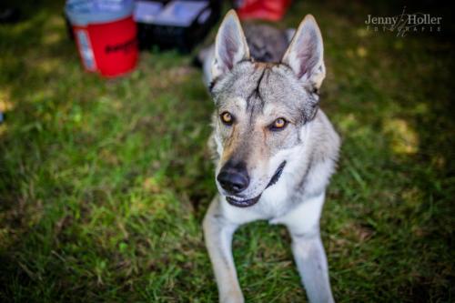 2017-08-19-Jen-Tierheimfest-45